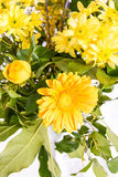 Kwitnie bukiet dla dodatku specjalnego Obraz Royalty Free
