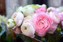 Kwitnie bukiet z kremowy lekki i białym - różowi jaskieru Ranunculus kwiaty w pełnym kwiacie fotografia royalty free