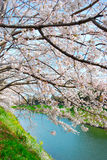kwitnie czereśniowego brzeg rzeki obrazy stock