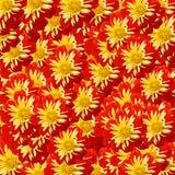 kwitnie czerwień Obraz Royalty Free