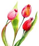 kwitnie czerwonych tulipany Zdjęcia Royalty Free