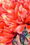 Kwitnie dekorację Obraz Royalty Free