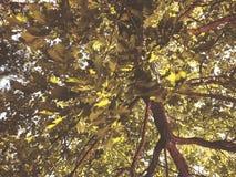 Kwitnie drzewa w miasto jardzie w słonecznym dniu Zamyka w górę strzału obrazy royalty free