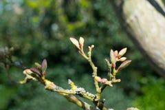 Kwitnie drzewo Obrazy Royalty Free