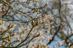 Kwitnie drzewo Zdjęcie Stock
