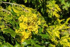 Kwitnie drzewo Obraz Royalty Free