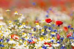 kwitnie dzikiego zdjęcie stock