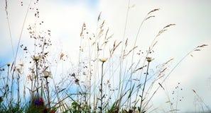 kwitnie dzikiego fotografia stock