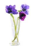 kwitnie fiołka obraz stock