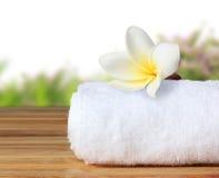 Kwitnie frangipan Zdjęcie Stock