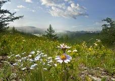 kwitnie góry Fotografia Royalty Free