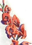 kwitnie gladiolusa watercolour ilustracji