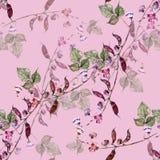 Kwitnie Haricot akwarela Kwiecisty Bezszwowy wzór na Różowym tle Zdjęcie Royalty Free
