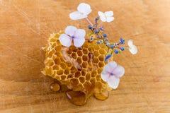 kwitnie honeycomb Zdjęcia Stock