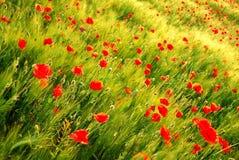 kwitnie inne rośliny Obrazy Royalty Free