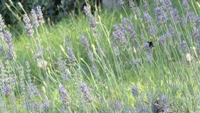 kwitnie insekty zbiory wideo