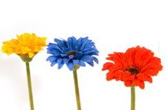 kwitnie jedwab Fotografia Stock
