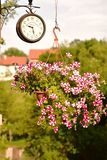 Kwitnie kosz z kwiatami i brown ściana wspinającym się rocznika zegarem czerwonymi i białymi Fotografia Royalty Free