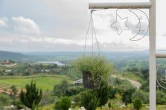Kwitnie koszykowego obwieszenie na słupa Odgórnego widoku landscpae Obrazy Royalty Free