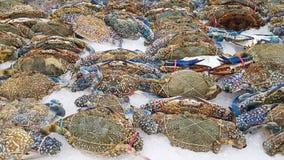 Kwitnie kraba, Błękitny krab, Błękitny pływaczka krab, Błękitny manna krab, piasek Zdjęcia Stock