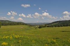 Kwitnie lato łąka Zdjęcia Stock