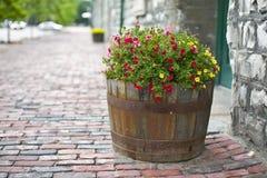 kwitnie lato zdjęcie stock