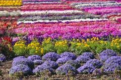kwitnie lato Fotografia Stock