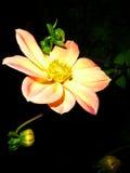 Kwitnie lato noc obrazy stock