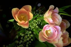 Kwitnie lightbrush tulipany Zdjęcia Royalty Free