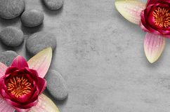 Kwitnie lotosu i dryluje zen zdrój na popielatym tle zdjęcie stock