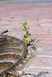 Kwitnie na chodniczku Zdjęcia Royalty Free