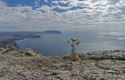 Kwitnie na skalistej falezie na tle morze Zdjęcie Stock