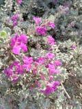 Kwitnie nature& x27; s obraz royalty free