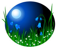kwitnie noc Zdjęcia Stock
