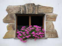 kwitnie okno Obraz Royalty Free