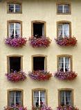 kwitnie okno Obrazy Royalty Free