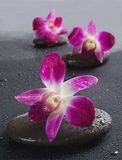kwitnie orchidei kamieni zen Obraz Stock
