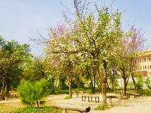 Kwitnie piękno w Islamabad obrazy stock