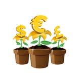 kwitnie pieniądze Zdjęcie Royalty Free