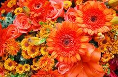 kwitnie pomarańcze Obrazy Stock