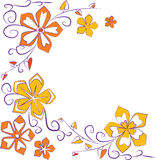 kwitnie pomarańcze Obraz Royalty Free