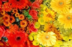 kwitnie pomarańcze Obraz Stock