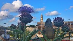 Kwitnie pomnika Fotografia Royalty Free
