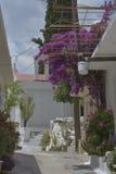 kwitnie purpurową czerwień Obraz Stock