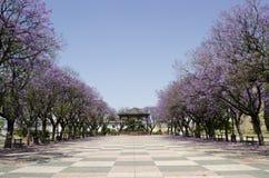 kwitnie purpurową wiosna Zdjęcia Royalty Free