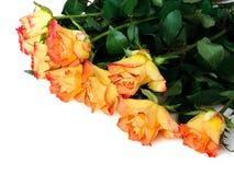 kwitnie różanego Zdjęcia Royalty Free