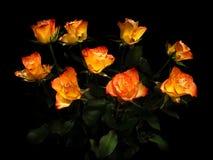 kwitnie różanego Fotografia Royalty Free