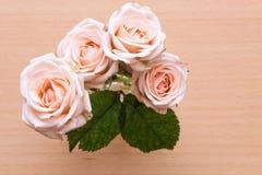 Kwitnie różany krzak w ogródzie Zdjęcia Royalty Free