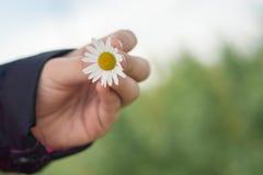 kwitnie ręki mienia Fotografia Stock