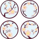 kwitnie Sakura drzewa royalty ilustracja